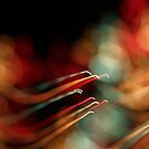 fireworks 26/1/14 by david gilliver