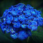 Rhapsody in blue by Karen Tregoning