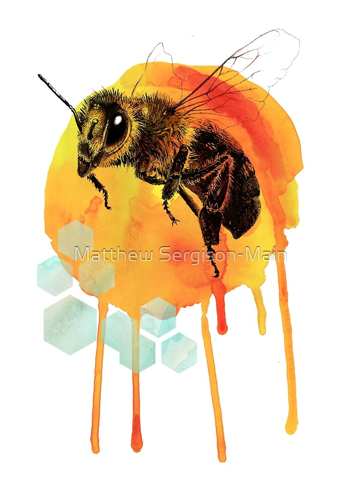 Honey bee watercolour by Matthew Sergison-Main