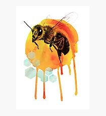 Honey bee watercolour Photographic Print