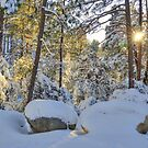 Sunny Morning After A Winter Storm by K D Graves Photography