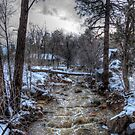 After the Winter Storm by K D Graves Photography
