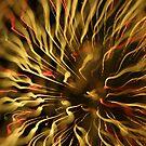 fireworks 23/8/13 by david gilliver