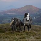 Wild Ponies by Mike Paget