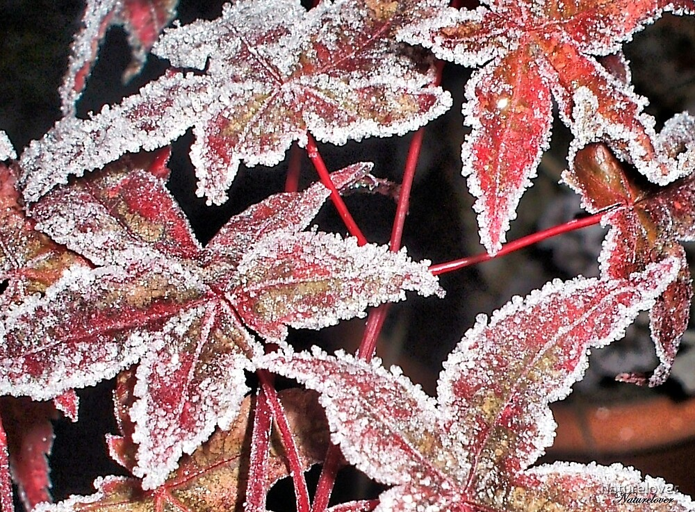 Autumn To Winter by naturelover