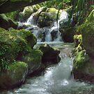 Waterfall,Lamington National Park, Queensland, Australia  by Adrian Paul