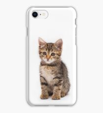 Little cute tabby kitten isolated on white background iPhone Case/Skin