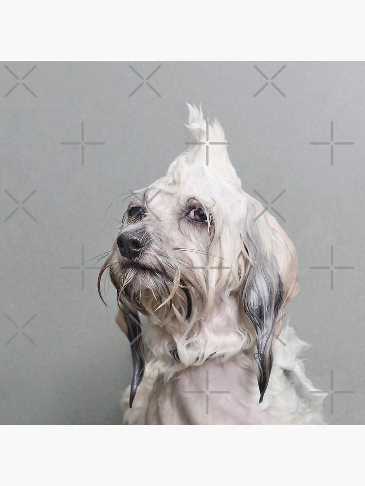 Wet Dog, Oscar by SophieGamand