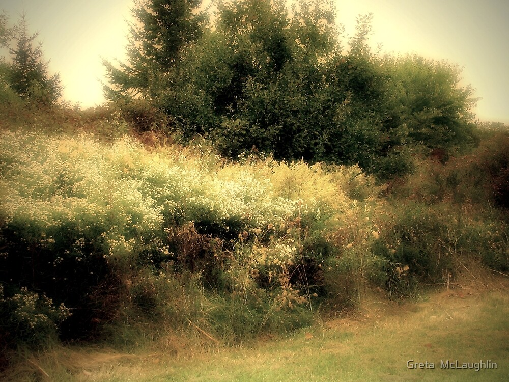Wildwood Flower by Greta  McLaughlin