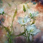 Campanula on the Wild Side by Teresa Pople