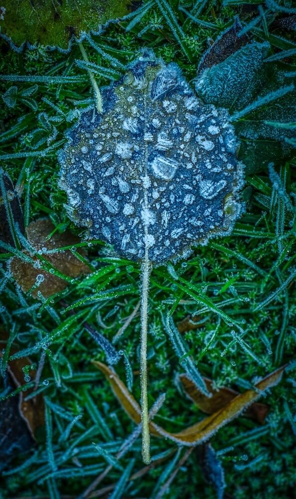 Frosty Leaf by mrdoomits