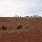 Animals Grazing in Peru's Sacred Valley by SkiCC