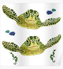Sea turtles, fish and sea horses  Poster