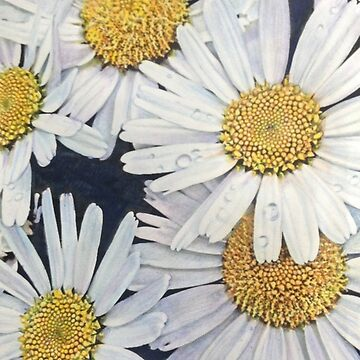 Daisies by MarinaC41