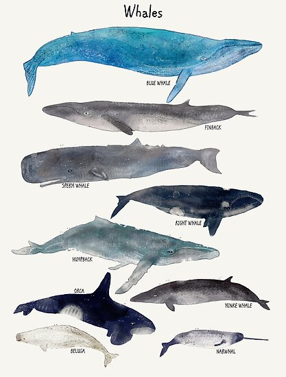 Quot Whales Quot Poster By Bri B Redbubble