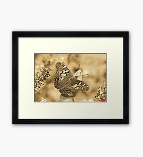 American Painted Lady Sumi-e Framed Print