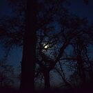 Treetop Moon by KR Green
