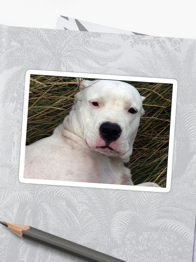 Dogo Argentino Sticker