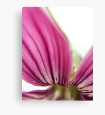 pink abstract flower macro beauty Canvas Print