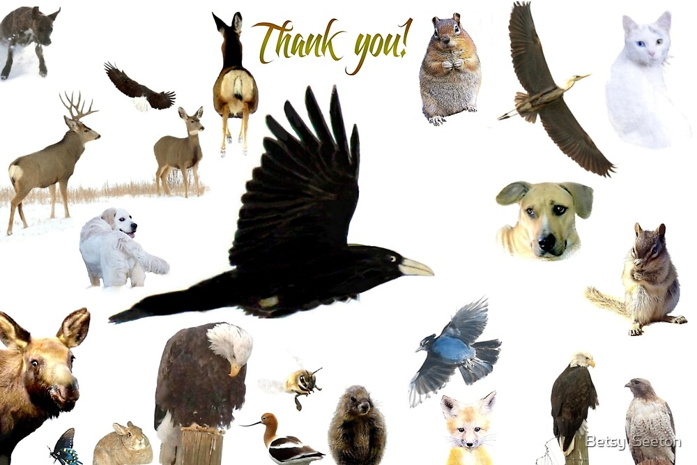 Thank You! - From the series For All The Animals by Betsy  Seeton