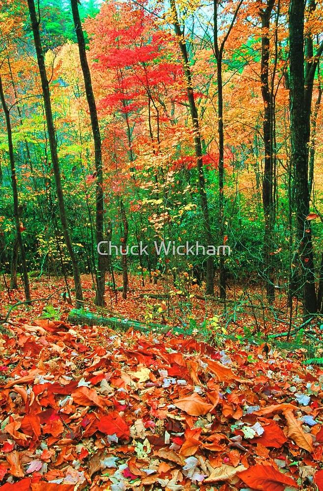 FOREST,AUTUMN. by Chuck Wickham
