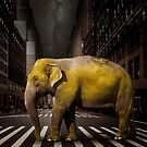 Elephant in New York by Vin  Zzep