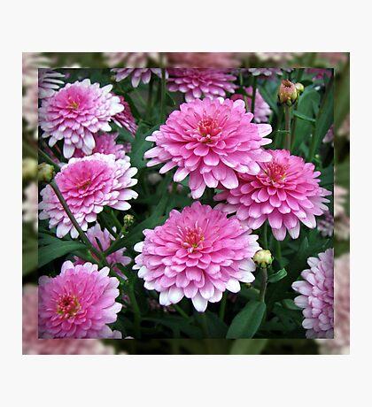 Pretty-in-Pink Summer Flowers Fotodruck