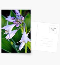 Lavender Bell Flower - k5935 Postcards