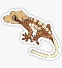 Harlequin Crested Gecko Sticker
