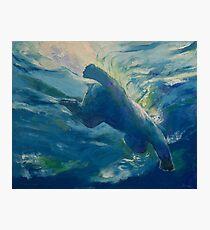 Polar Bear Swim Photographic Print