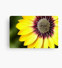 Yellow Osteospermum - Macro Flowers Canvas Print