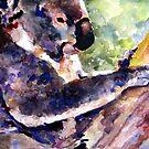 koala by pamfox