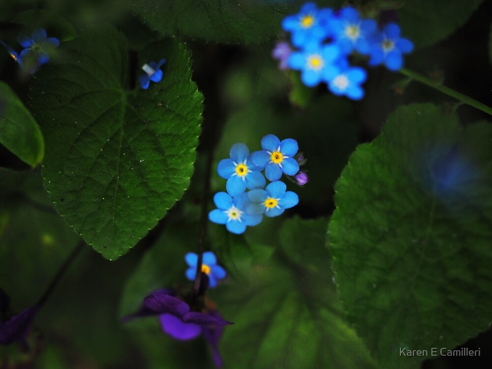 Violets and Forget Me Knots  by Karen E Camilleri