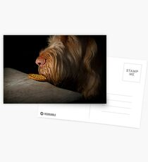 Orange and White Italian Spinone Dog Head Shot Postcards