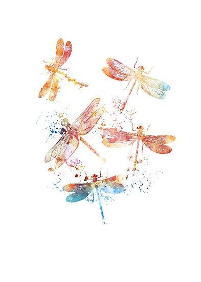 Dragonflies by DimDom
