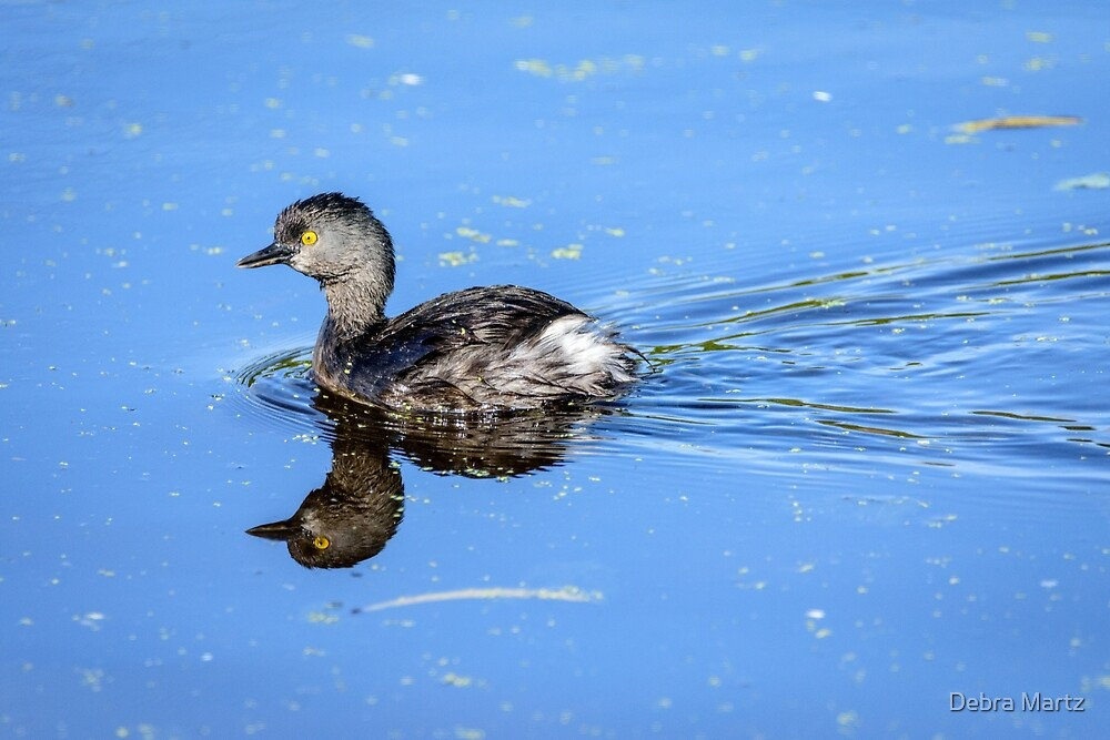 Least Grebe and Its Reflection by Debra Martz