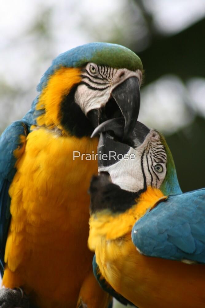 I Love You Too Babe.............xo by PrairieRose