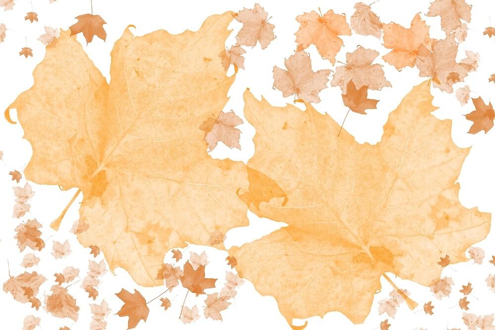 Autumnal Design by Andrea Mazzocchetti