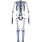 skeleton, xray, cartoon, funny by bbswedge