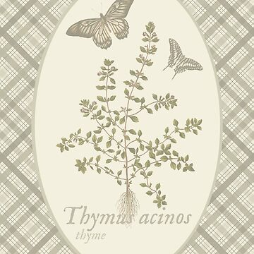 Butterflies and Thyme (natural) by historicnature