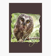 Wild Life Series - The Cute Brown Owl Photographic Print