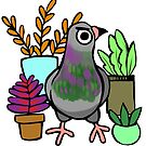 Succulent Pigeon by ProfessorBees