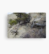 Twisted Dead Wood Canvas Print