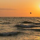 Pelican Into the Wind by CL--Photography