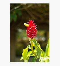 Bird Flower - Nature Photography Photographic Print