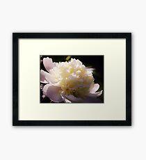 White Light Flower Framed Print