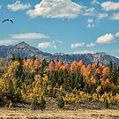 PERFECT FALL by Charlene Aycock