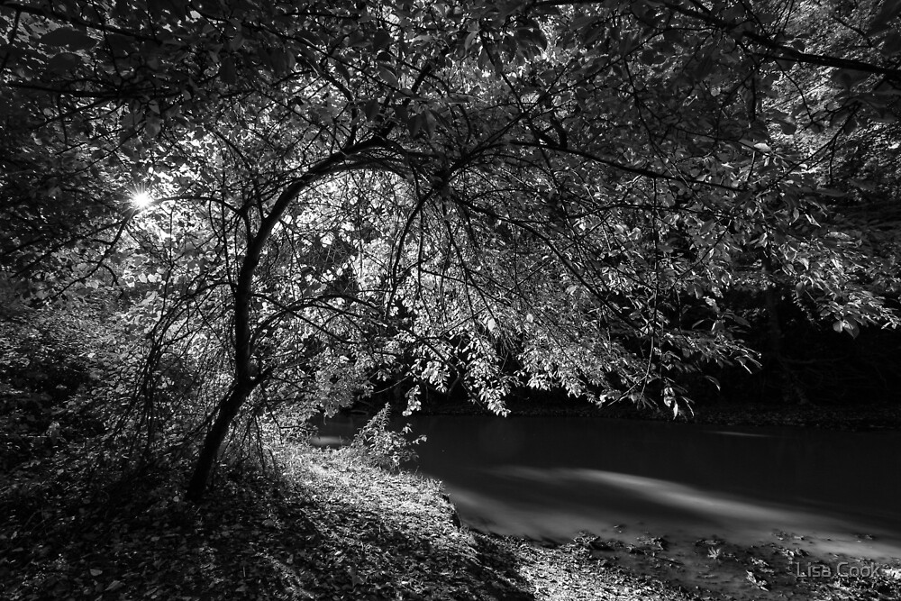 Linear Park by Lisa Cook