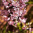 Hanging Blossom by jayneeldred