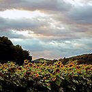 Field of Sunflowers by Terri~Lynn Bealle